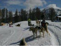 Chiens de Traineaux Hautes Alpes