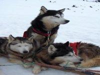 Les chiens d Oumiak Aventure
