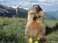 Decouverte des marmottes et des glaciers