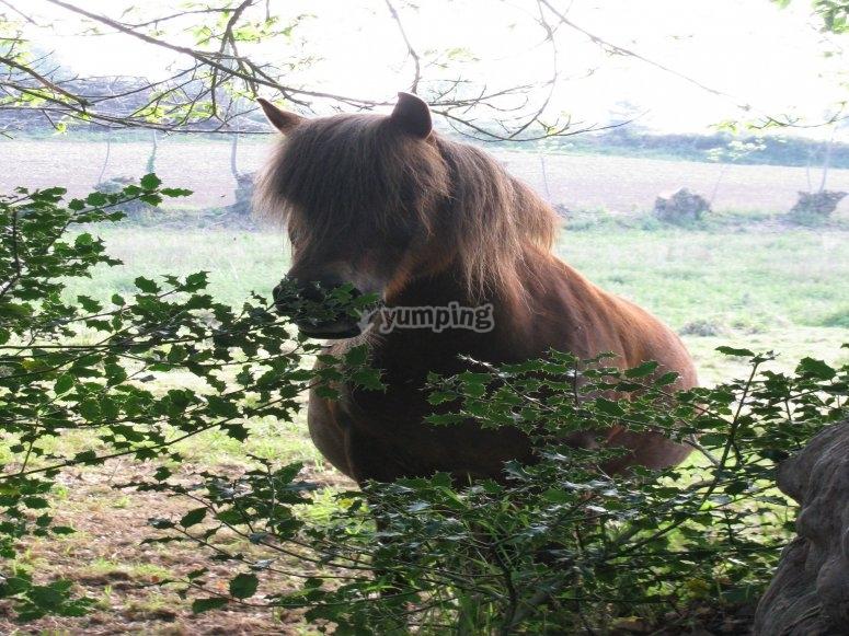 Balade Equestre de nuit avec la Ferme equestre La Haie Du