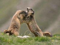 jeux de marmotte
