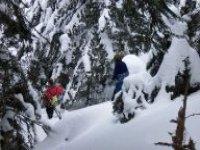 Foret des Hautes Pyrenees en raquettes a neige