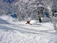 Faire du snowboard en foret