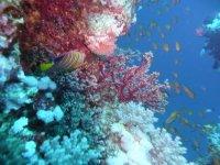 A la decouverte de la faune et la flore maritime