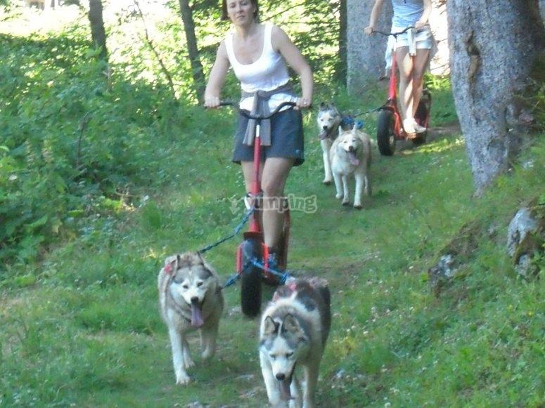 Sur les sentiers en Cani Trottinette