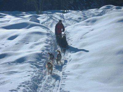 Traîneau à la Ferrière (Isère) - Adulte