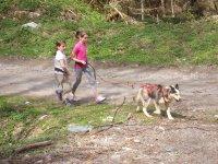 Activites avec les chiens