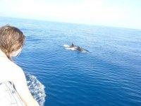 Observation des cetaces en Mediterranee