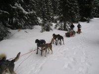 Les chiens et l attelage de Lungaiak