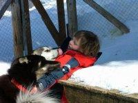 Complicite enfant et chiens d attelage