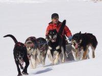 Moniteur sur le traineau avec les chiens