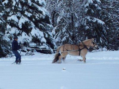 Second Souffle Ski Joëring