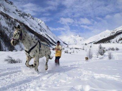 Centre Équestre Le Ranch du Grand Aigle Ski Joëring