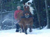 Dans la neige avec skis et chevaux de montagne