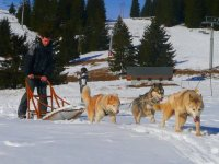 Decouverte du mushing en seminaire