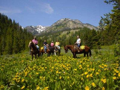 Les Crins du Col Randonnées Équestres