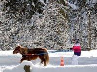 Ski tracte par un cheval en ski joering