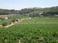 villages viticoles de la Provence