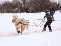 Ski joering au galop a poney