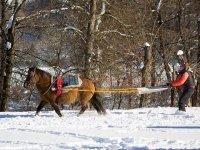 Tracte par un cheval