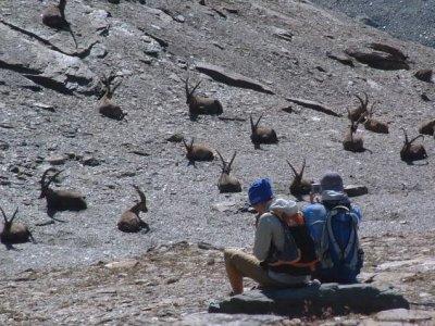 Bureau des Guides Les Arcs Randonnée