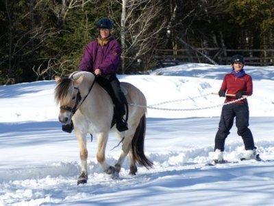 Equibauges Ski Joëring