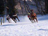 Cours et competition Ski joering