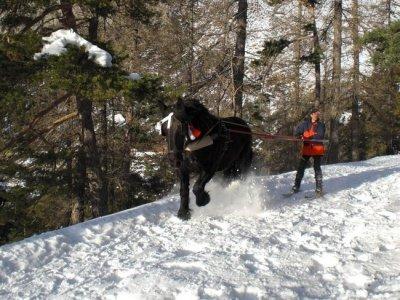 La Ferme du Mercantour Ski Joëring