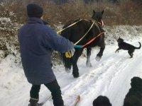 ski tracte a cheval dans les Alpes Maritimes