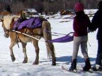 Ski joering avec la monitrice