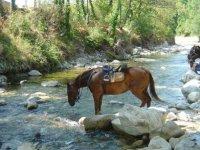 Pause rafraichissante pour les chevaux