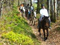 Sortie equestre dans les bois