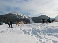 Ski Joering dans la poudreuse en Isere