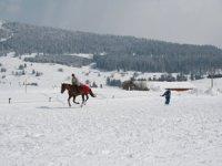 ski Joering hivernal dans le Jura