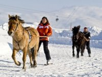 Neige skis et cheval