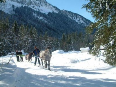 L'écurie des Frasses Ski Joëring