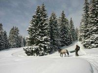 Itineraire ski Joering dans le Jura