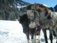 Les doux chevaux
