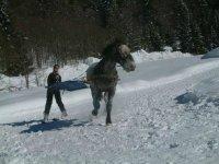 Ski Joering a l Ecurie des Frasses