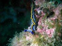 Plongee sous marine dans l Aude