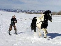 Skijoring en France et ailleurs