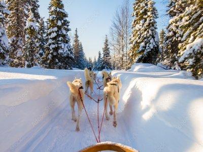 Conduite chiens de traîneaux aux Portes du Soleil