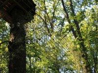 Filets dans les arbres du parc