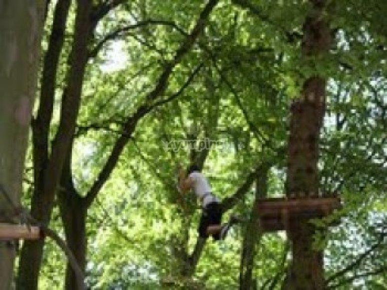 Parcours Aventure Woody Park