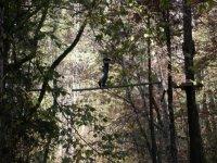 Aventure dans les arbres