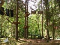 Installations dans les arbres