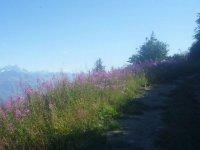 Sentiers de randonnee dans les Alpes