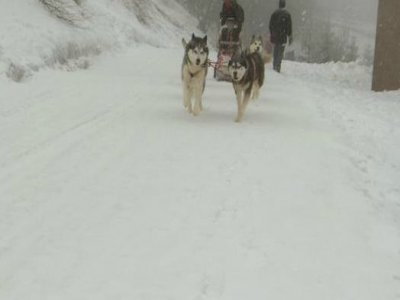 Rando Quad A.B.S Mushing