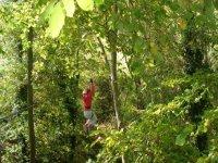 Tyrolienne entre les arbres