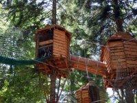 Les cabanes dans les arbres